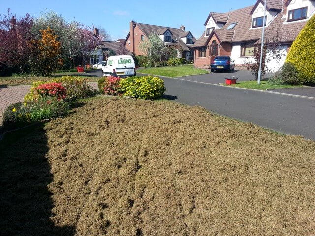 front lawn double scarified