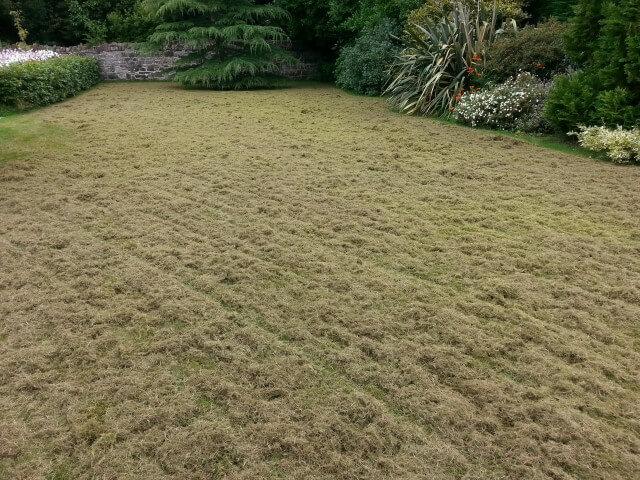 Cultra lawn scarification