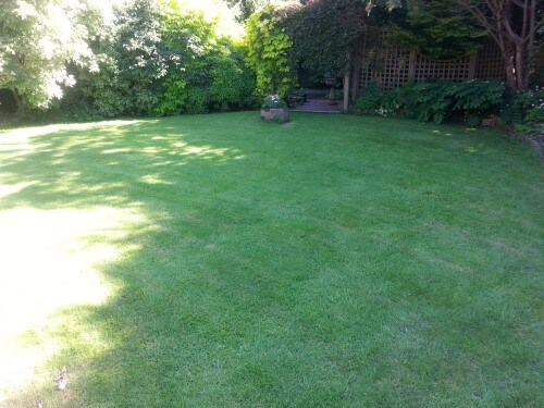 glengormley small lawn after scarification