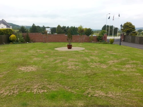 Whitehead lawn topdressed to improve drainage - Premier Lawns