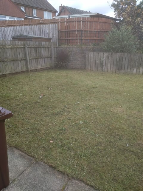 cleared back lawn