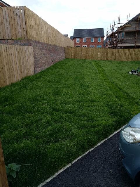 first cut new lawn