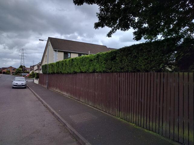 high hedge cut
