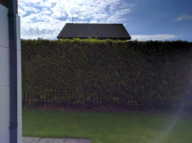 newtownabbey high hedge