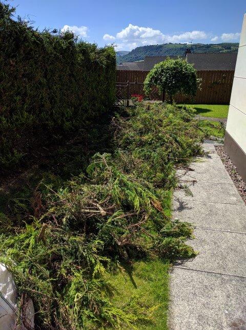 newtownabbey waste from hedge