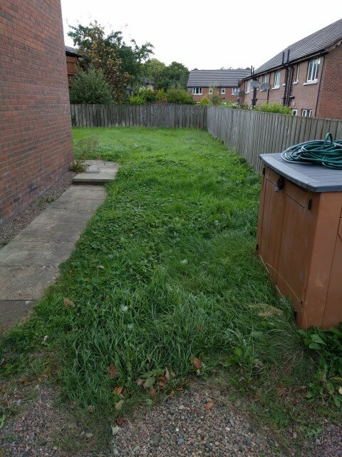 overgrown side lawn