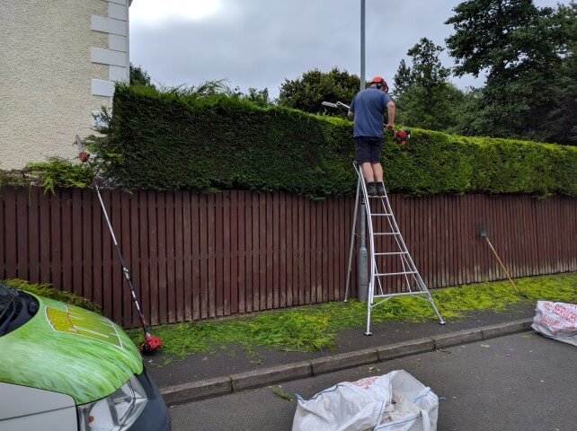 tripod ladders hedge cutting