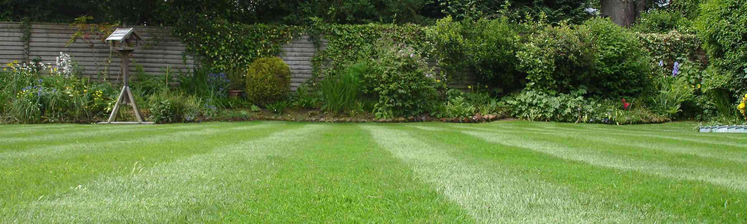 worn out lawn renovated by premier lawns