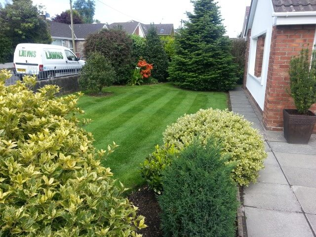 A lawn in jordanstown garden that we mow