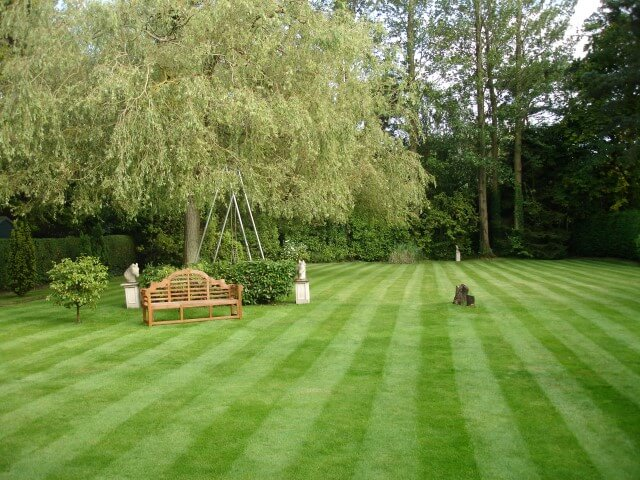 Greenisland garden