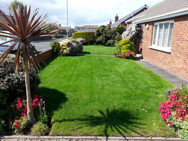 whitehead garden after scarify