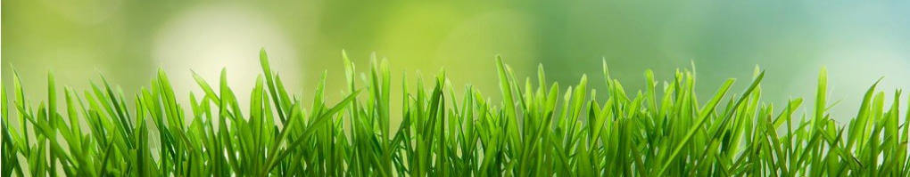 nutrients your lawn needs