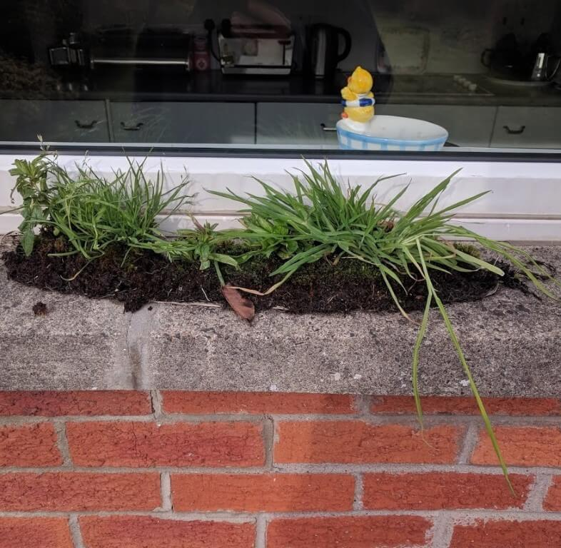 weeds from a gutter