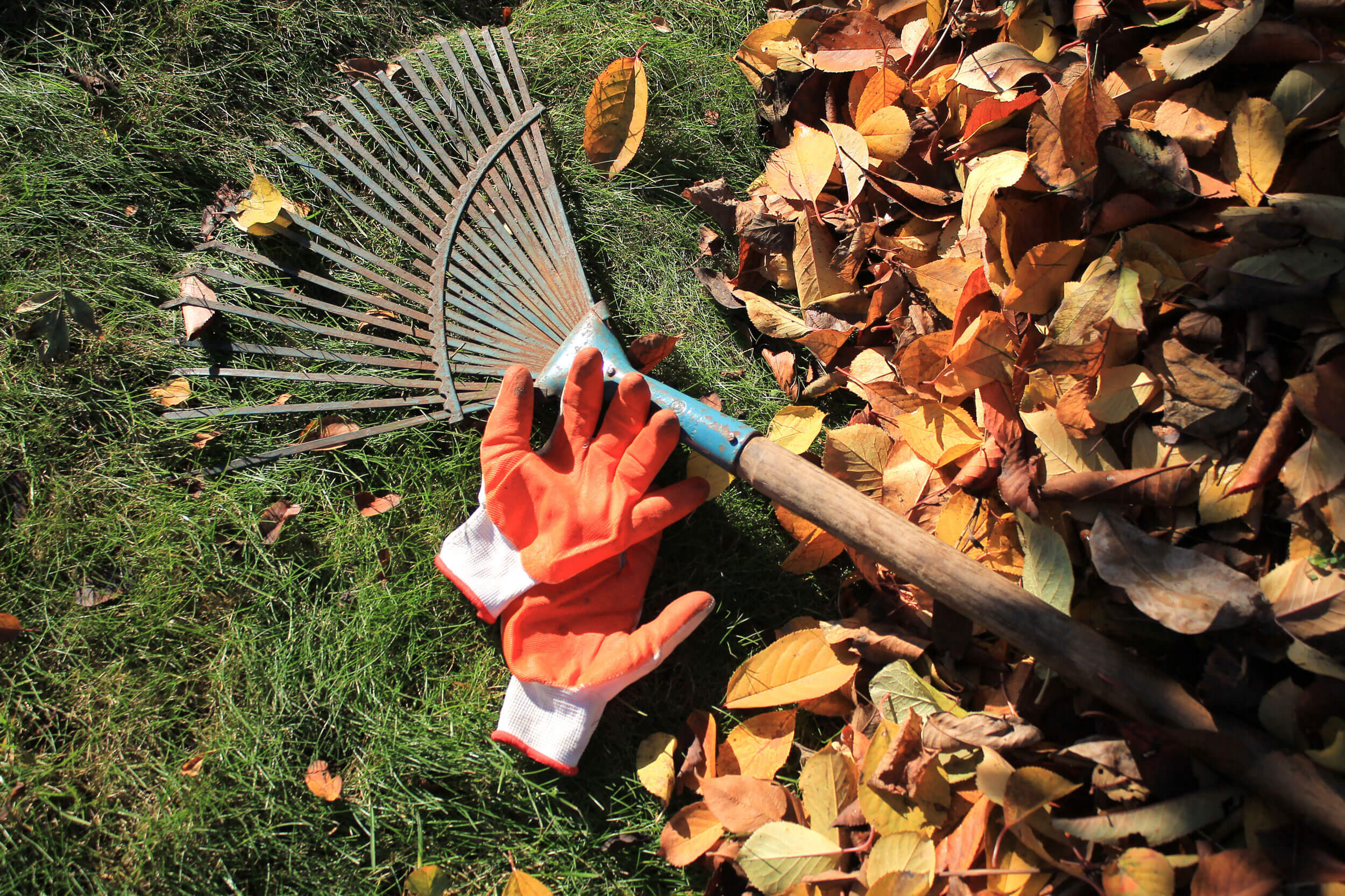 leaf rake and gloves - essential autumn lawn care tools