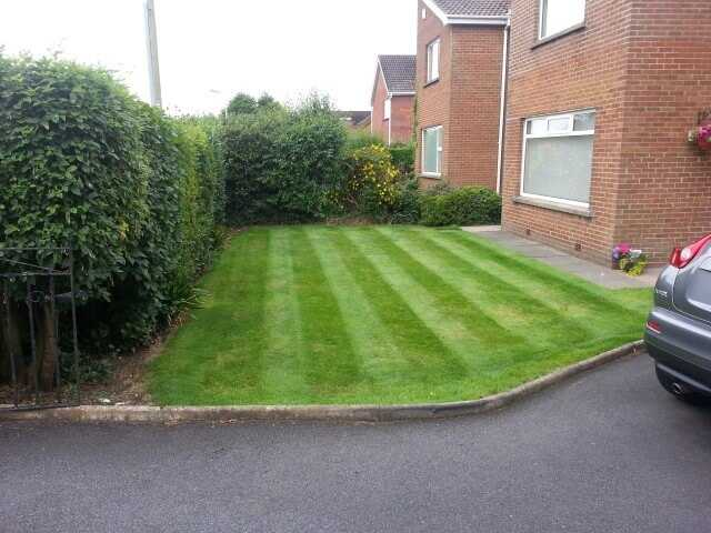 A lawn in greenisland that cut on a 10 day basis